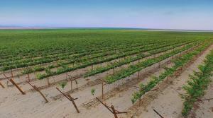 Cerca de 100.000 hectáreas se pondrán en valor para el sector agrícola con tres proyectos de irrigación