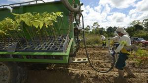 CGTP propone que la agroindustria y agroexportación queden excluidas del ámbito de aplicación de la Ley del Trabajo Agrario