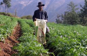 CHANCHAMAYO: INSTALAN CUATRO ALMACENES DE GUANO DE ISLA