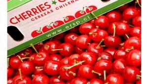 Chile proyecta exportar 30 millones de cajas de cerezas en la campaña 2017/2018