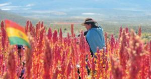 China muestra interés en comprar quinua boliviana