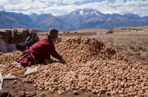 CIP dona el premio Caral 2020 para proteger la salud y los medios de subsistencia de agricultores de papa de los Andes afectados por crisis de Covid-19