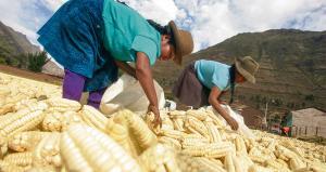 """CNA exige declarar """"Perú país libre de transgénicos"""""""