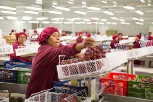 """Comex Perú: """"Sector agropecuario resulta clave para el desarrollo integral del país"""""""