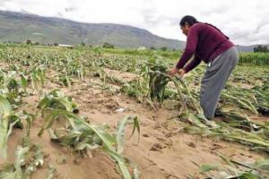"""ComexPerú: """"Trabajo conjunto entre el sector público y privado podría fortalecer un seguro agrario que beneficie a más peruanos"""""""