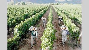 Comisión de Economía del Congreso aprueba sueldo básico agrario en S/ 1.116 mensuales