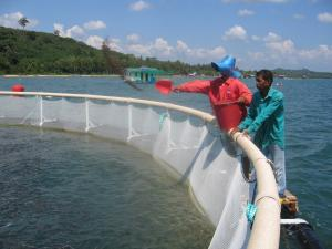 Compra de alimento balanceado para acuicultura en la selva representa más del 70% del costo de producción