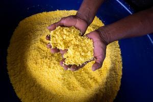 """Comunidad indígena Ticuna vendió más de 700 kilos de fariña """"Amarillita"""" durante Expoamazónica 2019"""