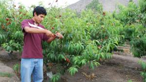 Congreso aprueba dictamen para crear el Secigra agrario
