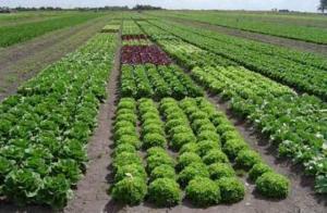CONGRESO INTERNACIONAL DE AGRICULTURA EN AMBIENTE SE REALIZARÁ EN PANAMÁ