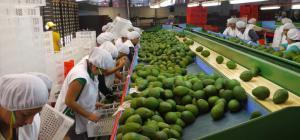 Conozca qué mercados están por abrirse en lo que resta del 2017 y todo el 2018 para los productos de agroexportación peruana