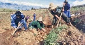 Consejo de Ministros aprobó FAE Agro con fondo por S/ 2.000 millones