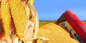 Consejo Internacional de Cereales baja previsión de cosecha global de maíz 2020-2021