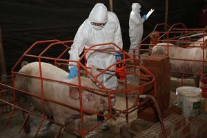 Consumo de carne de cerdo en Perú alcanza las 158 mil toneladas al año