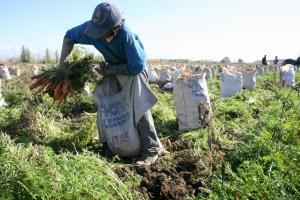 Conveagro alerta que más de 660 mil familias agricultoras en Perú han perdido su producción por falta de apoyo