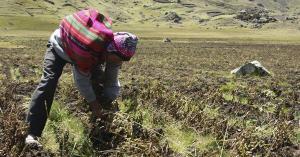 Conveagro pide declarar en emergencia el sector agropecuario