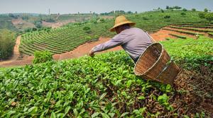 Conveagro solicita fondo de salvataje para la agricultura de S/ 5.000 millones