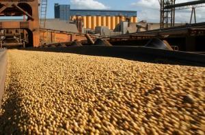 Creció la importación de soya en 2019 y llegó a valores de US$ 142.6 millones