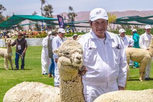 Criaderos de alpaca de Arequipa y Puno fortalecieron su capacidad productiva  y mejoraron calidad de la fibra