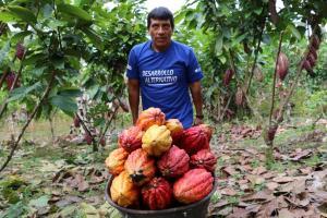 Cultivos alternativos generan más de S/ 29 millones a productores en plena pandemia
