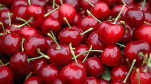 Cultivos de cerezas deben instalarse en zonas de inviernos fríos y primaveras cálidas y sin lluvias