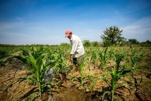 Daños en las cosechas de Brasil elevan precios mundiales de alimentos