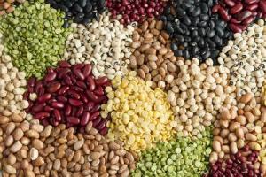 De las 220 mil hectáreas de legumbres que se instalan en el país, ni el 1% corresponde a semillas de calidad