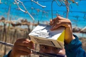 Desarrollan alianzas estratégicas en La Libertad para el control y erradicación de la mosca de la fruta