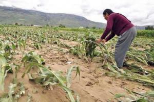 Destinan fondo de S/ 26 millones para financiar el Seguro Agrícola Catastrófico en ocho regiones durante la campaña agrícola 2019/2020