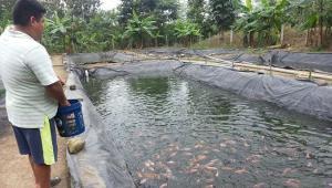 Devida transfiere más de S/ 1.5 millones para fortalecer producción de peces, café y piña en Puno