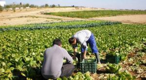 Dinamismo del sector agropecuario peruano se pone en riesgo debido a propuestas inadecuadas del Poder Legislativo
