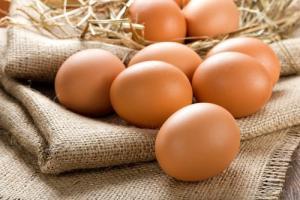 Disminuye notablemente la exportación de huevos fecundados