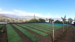 DRA Cajamarca logró producción de 330 mil plantones forestales en Hualgayoc – Bambamarca