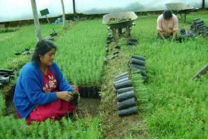 DRA Junín proyecta instalar más de 1 millón de plantones este año