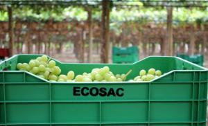 Ecosac proyecta ventas por US$ 106 millones al cierre de 2019