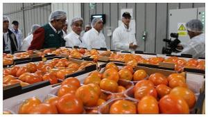 EE.UU., Reino Unido y Países Bajos fueron los principales mercados de la mandarina peruana al cierre de la campaña 2019