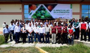 Ejecutarán plan de acción para proteger y evitar ingreso del HLB en Perú