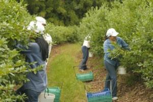Ejecutivo aprobaría hoy proyecto para extender Ley de Promoción Agraria hasta el 2031