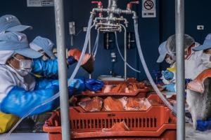 Ejecutivo establece medidas para continuidad del desarrollo de la acuicultura