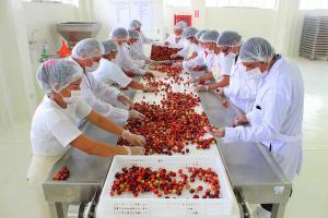 Ejecutivo invierte S/ 18 millones para potenciar el CITE Productivo