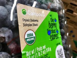 El 30% de las hectáreas de arándanos de Camposol están bajo agricultura orgánica