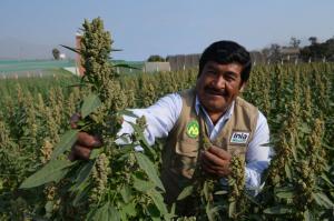El 45% de los cultivares comerciales registrados  en Perú fueron producidos por el INIA
