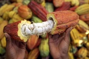 El 65% de nuestra producción agrícola está basada en recursos genéticos nativos