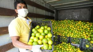 El camino para resolver el problema del crédito agrario en Perú pasa por la organización de los productores y fondos especializados