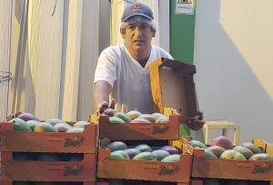 """""""El National Mango Board es un enorme referente para ser imitado en otros países y continentes"""""""