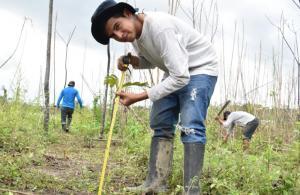 El proyecto que plantará 155 mil árboles en zonas degradadas de Madre de Dios