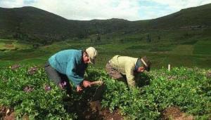 El reto del próximo gobierno que recibirá 2.08 millones de predios rurales sin titulación