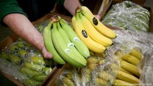El sector bananero ecuatoriano aumenta un 6.95% sus exportaciones a pesar de la pandemia