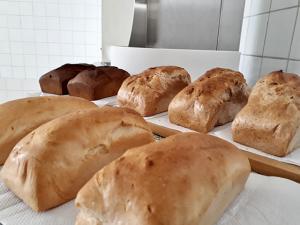 "Elaboran ""GRANPAN"", alimento altamente nutritivo a base de granos andinos"