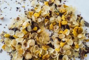 Elaboran producto que permite conservar frutas y hortalizas a partir de semillas de tara